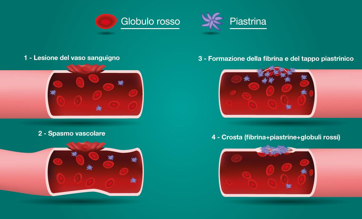 La composizione del sangue