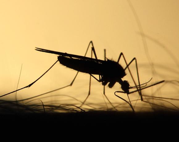 Stagione estiva e West Nile Virus