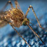West Nile Virus: sospese le misure di prevenzione