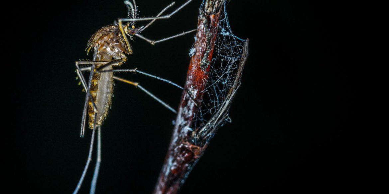Grecia: sospesa la prevenzione per la trasmissione della malaria